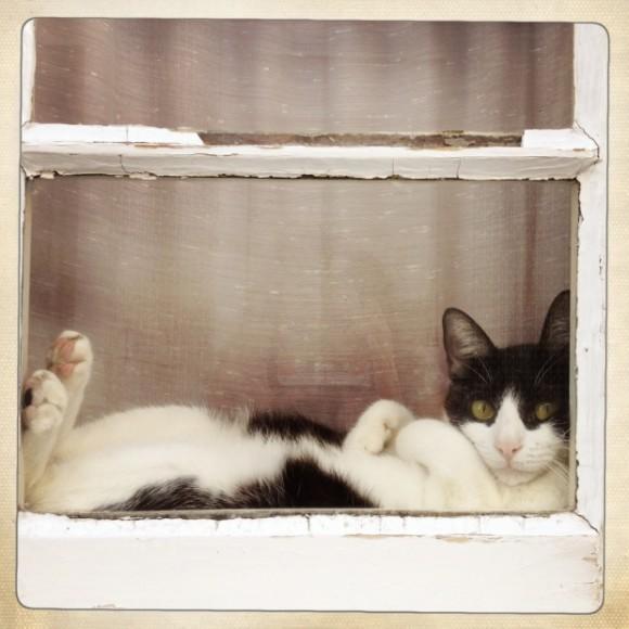 Miau!, por Patrícia Almeida